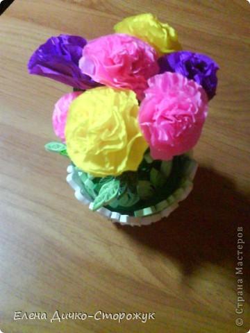 Цветы в горшке фото 2