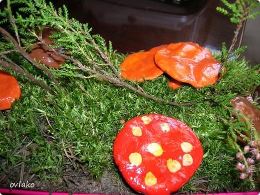 осенние грибочки фото 5