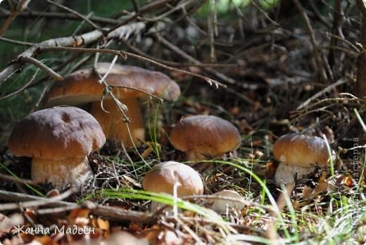 Тихая охота, сентябрь 2010. фото 6