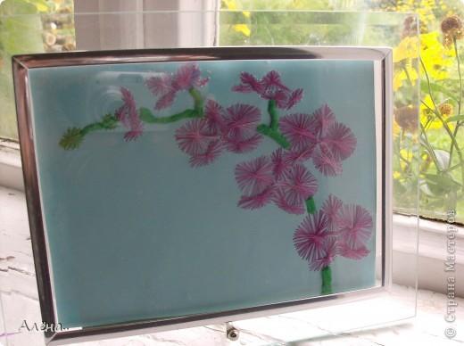 Любимые орхидеи.. фото 1