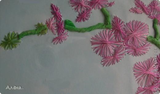 Любимые орхидеи.. фото 4