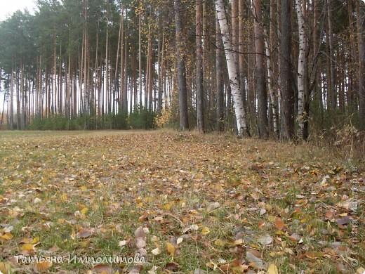 Пока нет дождика,решили прогуляться по лесу.Вернее это огороження территория стихийного парка фото 1