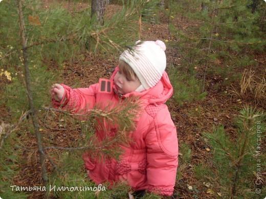Пока нет дождика,решили прогуляться по лесу.Вернее это огороження территория стихийного парка фото 9
