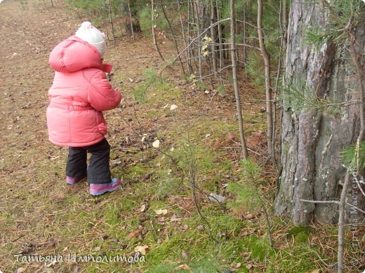 Пока нет дождика,решили прогуляться по лесу.Вернее это огороження территория стихийного парка фото 11