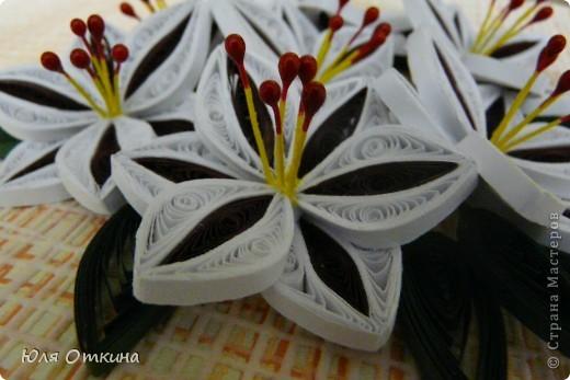 Вот и у меня появились лилии фото 4
