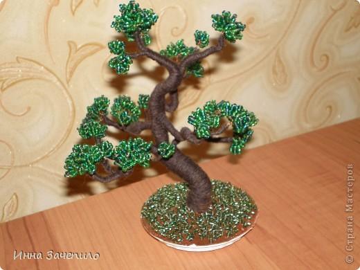 Моё первое деревце. фото 1