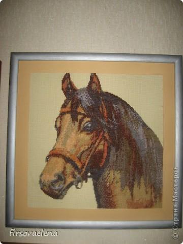 мои лошадки фото 2