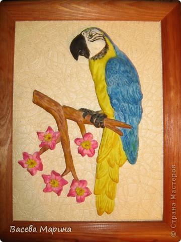 Сине-желтый ара это большой яркий попугай, очень мне такие попугайки нравятся.