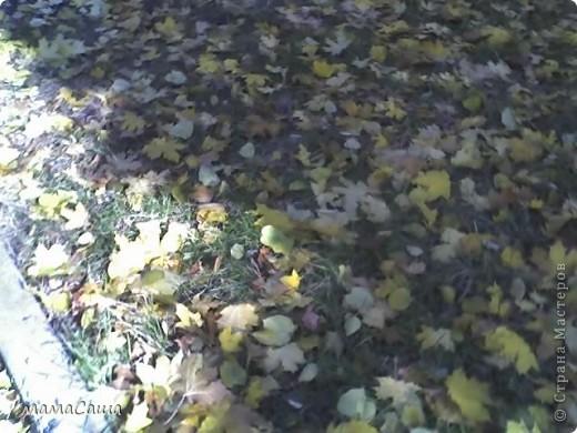 Конец сентября - о наступлении осени видно только по цвету неба. Может наша осень синяя? фото 16
