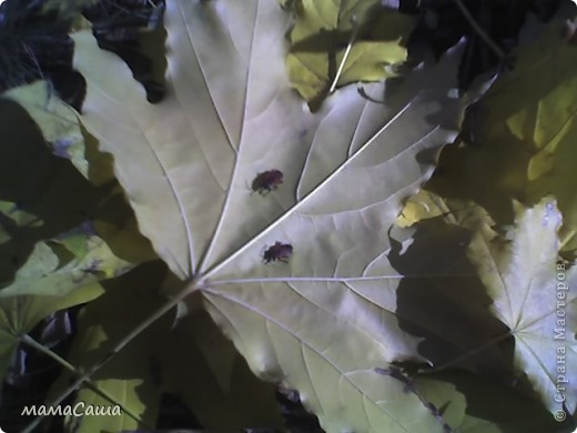 Конец сентября - о наступлении осени видно только по цвету неба. Может наша осень синяя? фото 19