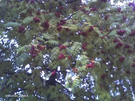 Конец сентября - о наступлении осени видно только по цвету неба. Может наша осень синяя? фото 21