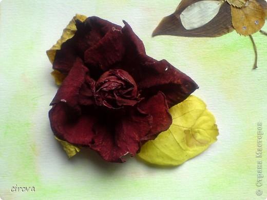 Поделка в школу. Сын (8лет ) вспомнил, что на утро нужна поделка , дома только листья и лепестки роз . Вот, что у нас получилось. Цветы на горячий пистолет собирала я, а бабочку сложил сын. фото 2