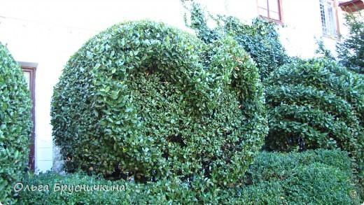 Никитский ботанический сад - комплексное научно-исследовательское учреждение, ведущее работы по вопросам плодоводства и ботаники. Основан в 1812 году ученым Христианом Стевеном. фото 3