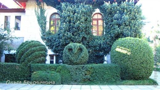 Никитский ботанический сад - комплексное научно-исследовательское учреждение, ведущее работы по вопросам плодоводства и ботаники. Основан в 1812 году ученым Христианом Стевеном. фото 2