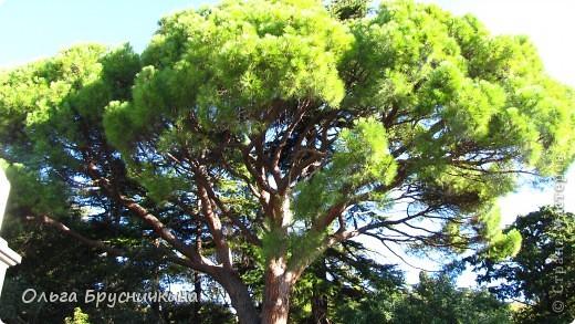 Никитский ботанический сад - комплексное научно-исследовательское учреждение, ведущее работы по вопросам плодоводства и ботаники. Основан в 1812 году ученым Христианом Стевеном. фото 4
