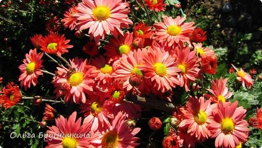 Никитский ботанический сад - комплексное научно-исследовательское учреждение, ведущее работы по вопросам плодоводства и ботаники. Основан в 1812 году ученым Христианом Стевеном. фото 24