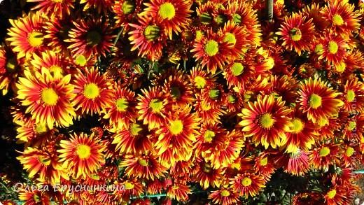 Никитский ботанический сад - комплексное научно-исследовательское учреждение, ведущее работы по вопросам плодоводства и ботаники. Основан в 1812 году ученым Христианом Стевеном. фото 27