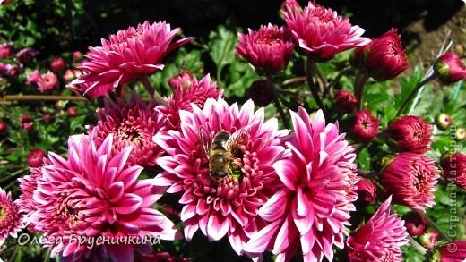 Никитский ботанический сад - комплексное научно-исследовательское учреждение, ведущее работы по вопросам плодоводства и ботаники. Основан в 1812 году ученым Христианом Стевеном. фото 28