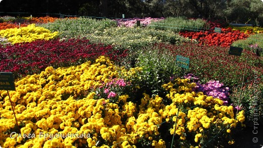 Никитский ботанический сад - комплексное научно-исследовательское учреждение, ведущее работы по вопросам плодоводства и ботаники. Основан в 1812 году ученым Христианом Стевеном. фото 23
