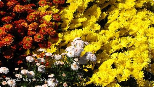 Никитский ботанический сад - комплексное научно-исследовательское учреждение, ведущее работы по вопросам плодоводства и ботаники. Основан в 1812 году ученым Христианом Стевеном. фото 22