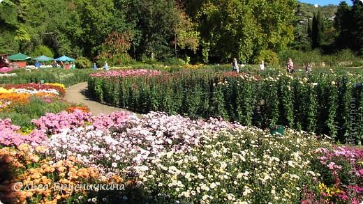 Никитский ботанический сад - комплексное научно-исследовательское учреждение, ведущее работы по вопросам плодоводства и ботаники. Основан в 1812 году ученым Христианом Стевеном. фото 12