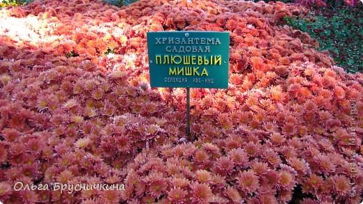 Никитский ботанический сад - комплексное научно-исследовательское учреждение, ведущее работы по вопросам плодоводства и ботаники. Основан в 1812 году ученым Христианом Стевеном. фото 20