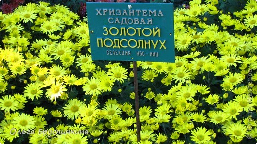 Никитский ботанический сад - комплексное научно-исследовательское учреждение, ведущее работы по вопросам плодоводства и ботаники. Основан в 1812 году ученым Христианом Стевеном. фото 21