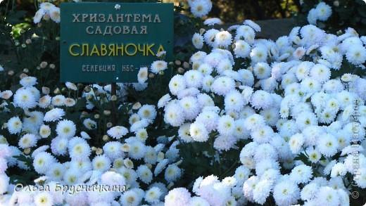 Никитский ботанический сад - комплексное научно-исследовательское учреждение, ведущее работы по вопросам плодоводства и ботаники. Основан в 1812 году ученым Христианом Стевеном. фото 18