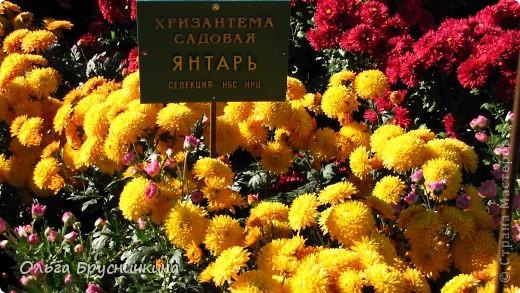 Никитский ботанический сад - комплексное научно-исследовательское учреждение, ведущее работы по вопросам плодоводства и ботаники. Основан в 1812 году ученым Христианом Стевеном. фото 19