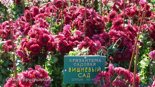 Никитский ботанический сад - комплексное научно-исследовательское учреждение, ведущее работы по вопросам плодоводства и ботаники. Основан в 1812 году ученым Христианом Стевеном. фото 17