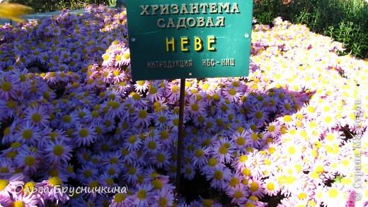 Никитский ботанический сад - комплексное научно-исследовательское учреждение, ведущее работы по вопросам плодоводства и ботаники. Основан в 1812 году ученым Христианом Стевеном. фото 15