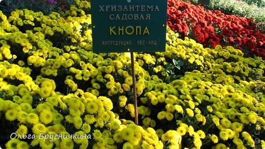 Никитский ботанический сад - комплексное научно-исследовательское учреждение, ведущее работы по вопросам плодоводства и ботаники. Основан в 1812 году ученым Христианом Стевеном. фото 14