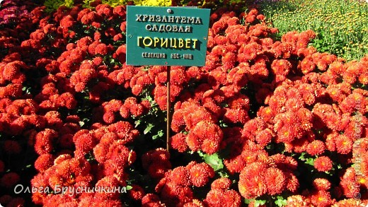 Никитский ботанический сад - комплексное научно-исследовательское учреждение, ведущее работы по вопросам плодоводства и ботаники. Основан в 1812 году ученым Христианом Стевеном. фото 13