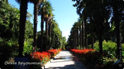 Никитский ботанический сад - комплексное научно-исследовательское учреждение, ведущее работы по вопросам плодоводства и ботаники. Основан в 1812 году ученым Христианом Стевеном. фото 10