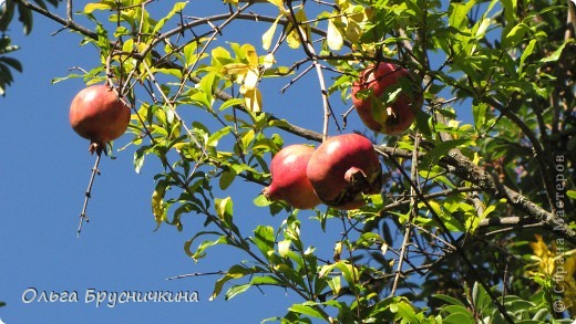 Никитский ботанический сад - комплексное научно-исследовательское учреждение, ведущее работы по вопросам плодоводства и ботаники. Основан в 1812 году ученым Христианом Стевеном. фото 8