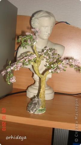 Цветущее дерево фото 2