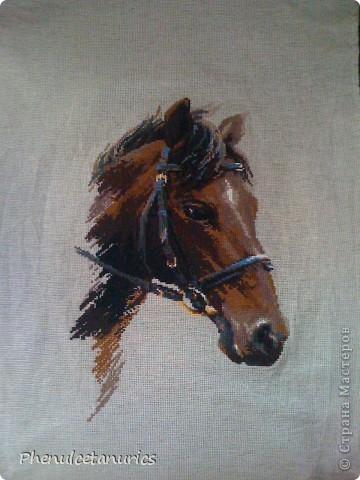 Коняшка фото 3