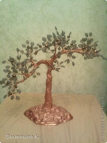 Мои знакомые сказали, что это - дерево счастья.  фото 1