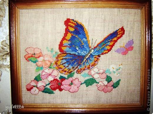 Серия бабочек фото 2