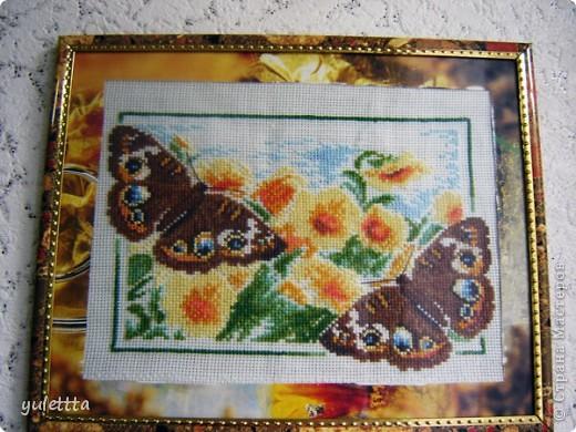 Серия бабочек фото 1