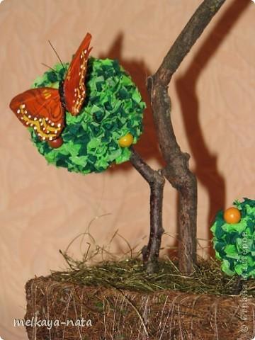 Вот  еще одно деревце(апельсиновое или мандариновое кому как больше нравится) фото 3