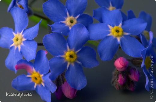 Опять цветы фото 4