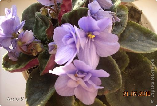Побывала на выставке, которую нам показала irina0828 http://stranamasterov.ru/node/98480 и вспомнила про свои цветочки, которые я фотографировала в разное время... Это голубые...  фото 1