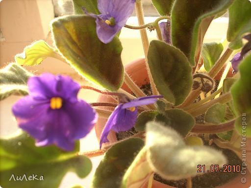 Побывала на выставке, которую нам показала irina0828 http://stranamasterov.ru/node/98480 и вспомнила про свои цветочки, которые я фотографировала в разное время... Это голубые...  фото 2