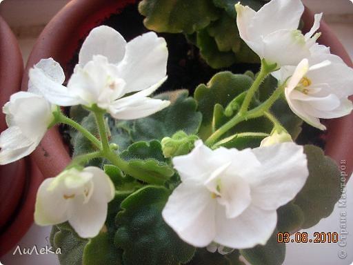 Побывала на выставке, которую нам показала irina0828 http://stranamasterov.ru/node/98480 и вспомнила про свои цветочки, которые я фотографировала в разное время... Это голубые...  фото 3