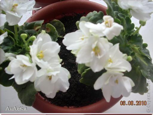 Побывала на выставке, которую нам показала irina0828 http://stranamasterov.ru/node/98480 и вспомнила про свои цветочки, которые я фотографировала в разное время... Это голубые...  фото 6