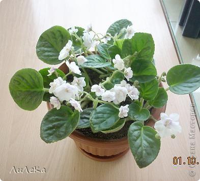 Побывала на выставке, которую нам показала irina0828 http://stranamasterov.ru/node/98480 и вспомнила про свои цветочки, которые я фотографировала в разное время... Это голубые...  фото 7