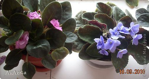 Побывала на выставке, которую нам показала irina0828 http://stranamasterov.ru/node/98480 и вспомнила про свои цветочки, которые я фотографировала в разное время... Это голубые...  фото 9