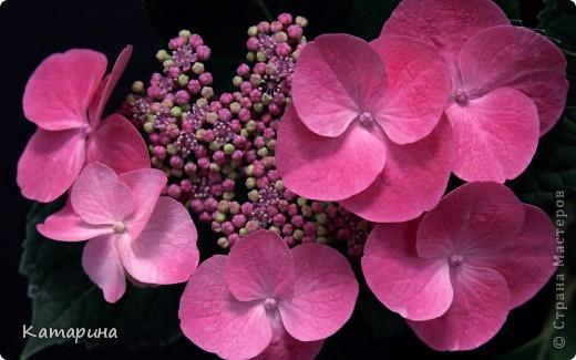 Опять цветы фото 5