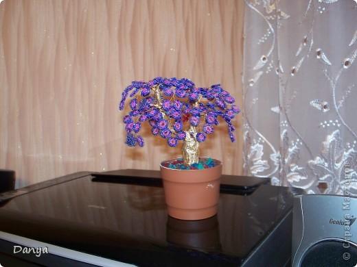 осеннее дерево фото 3